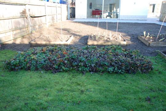 Garden_2010_2011_015