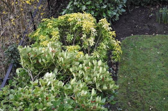 Garden_20110317_1388march_2011