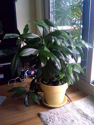 Bushyplant