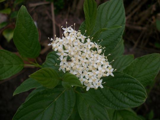 Flower_mystery