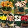 Short_stemmed_lilies