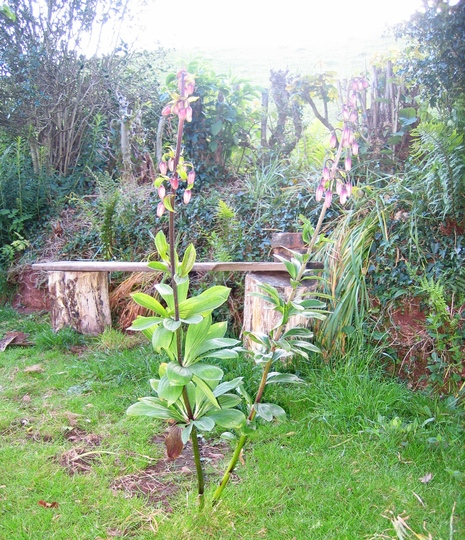 Garden_pic_may_2011_007