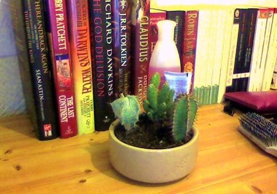 Cactus_