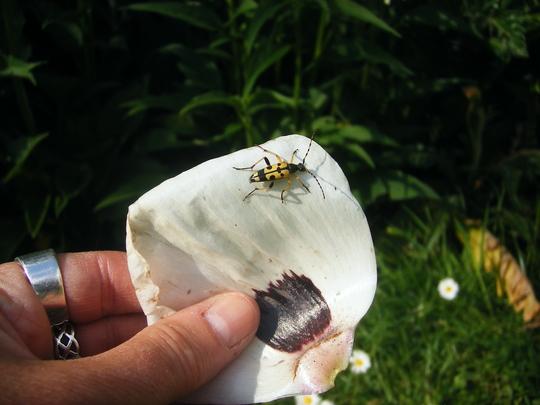 Bug_004