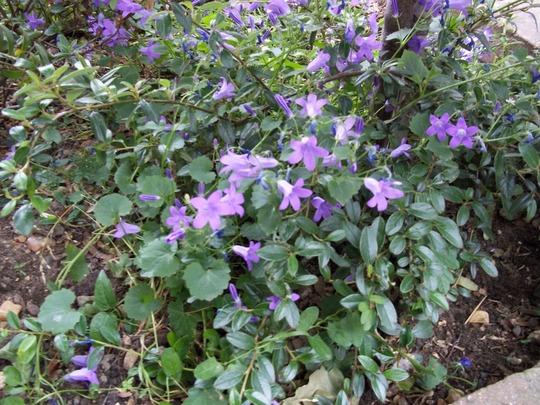 Dito_garden_110507