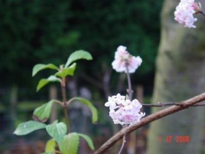 Mystery_shrub_1
