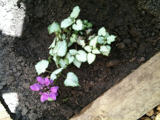 Plant_id_1
