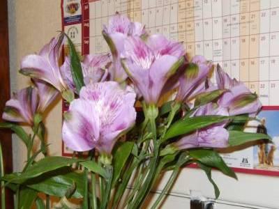 Flowers_002