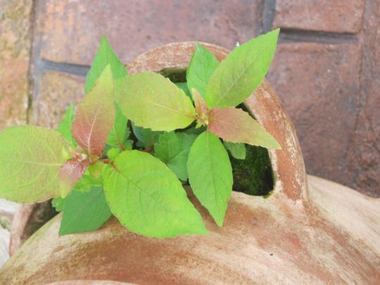 Plant_001