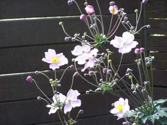 Garden_august_2011_030