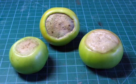 Tomatoes_base_up