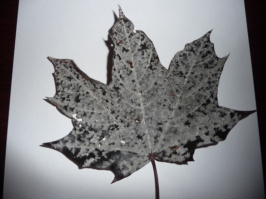 Infected_leaf