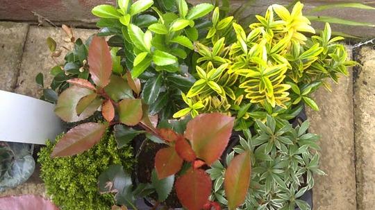 B_q_shrubs