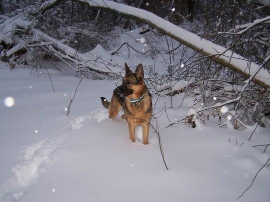 Spirit_snowing