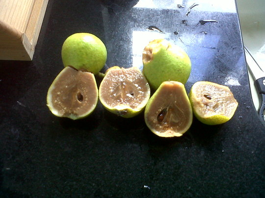 Strange_pear