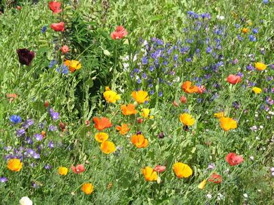 Grdnflowers