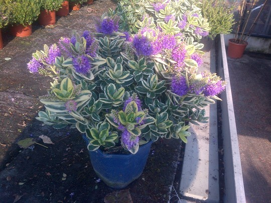 French_plants_001