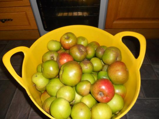 Apples_06_11_11