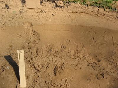 Pondfootprints4