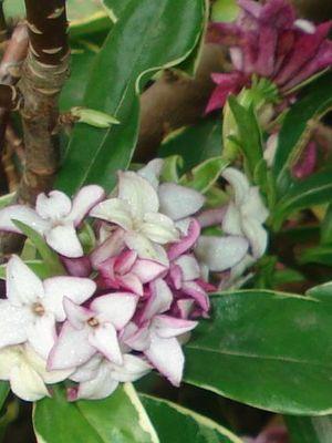 Mini_flowers