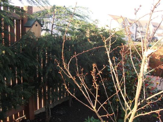 Garden_mar_12_053