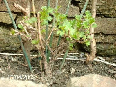 Our_garden_in_2009_039