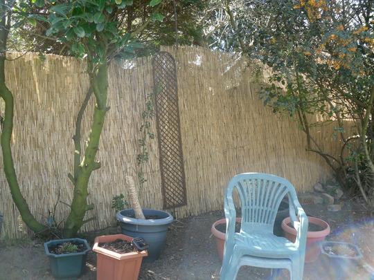 My_garden_march_2012_026