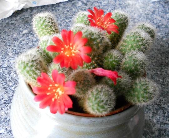 Cactus_06_04_12_001
