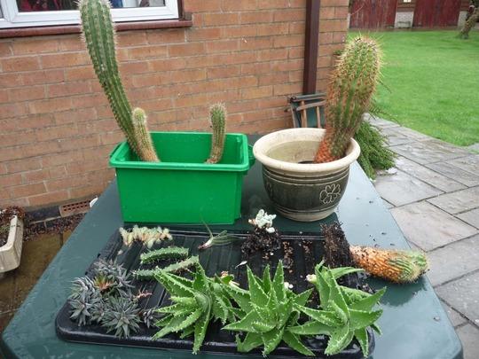 Cactus_succulents
