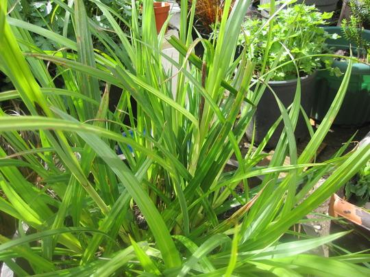 Grass_001