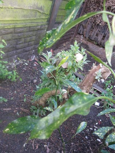 Garden_10_4_2012_017