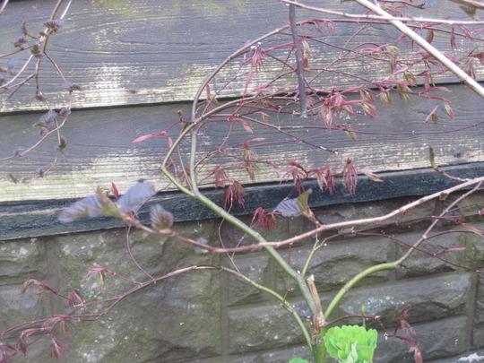Garden_10_4_2012_022