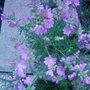 Garden_photo_s_099