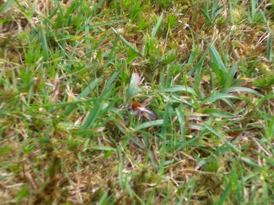 Lawn_invaders_004