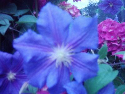 Garden_photo_s_137