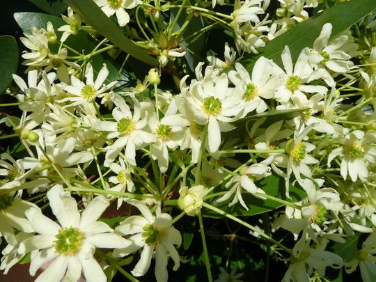 2012_05_27_garden_flowers_fruit_may_2012_001