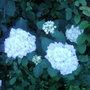 Garden_photo_s_125