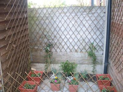 Plants_056