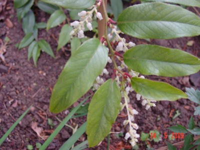 Mystery_plant_09-5