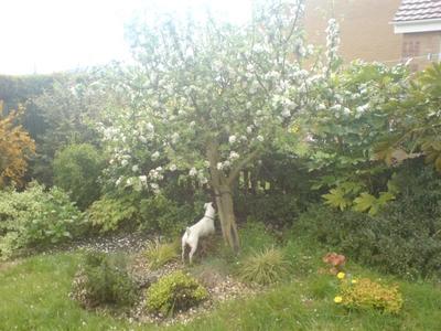 Appletreeslant