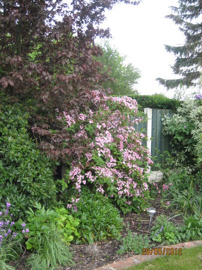 Garden_2012_004