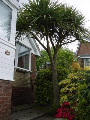 Palm_tree_003