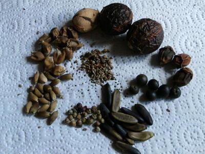 Australian_seeds