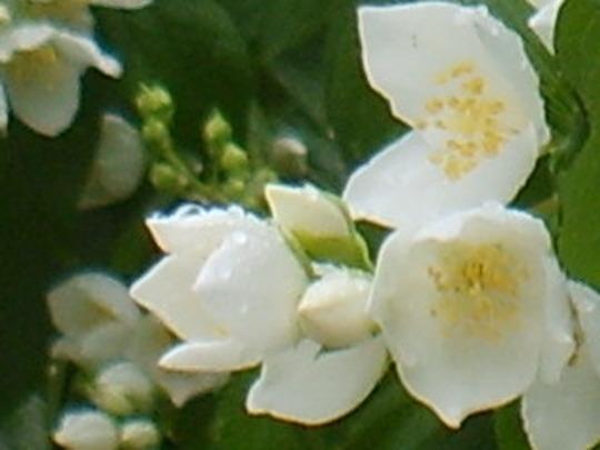 Blossomgrannycharlie_260608_017
