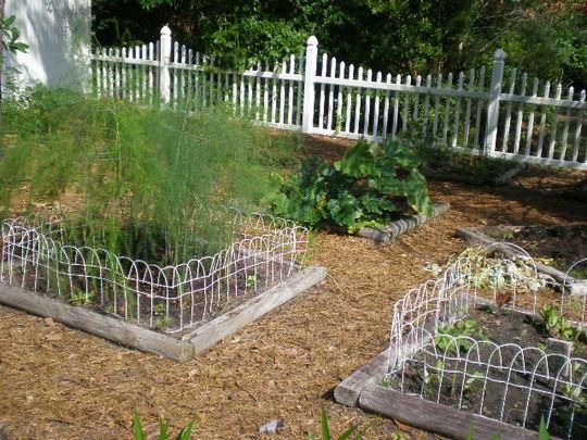 In_the_garden_june_21_2012_20_