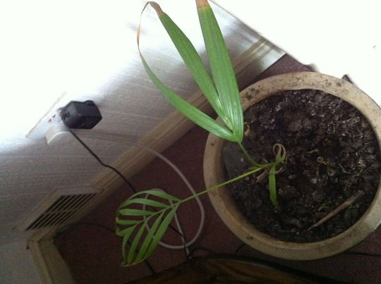 Plant_in_front_room_16_7_12