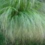 Grasses_09_001