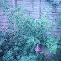 Garden_photo_s_146