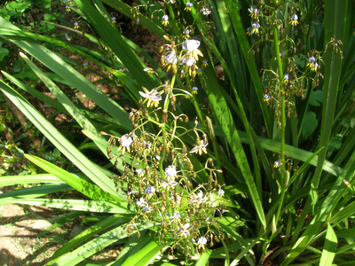 Plant_with_little_flowers1