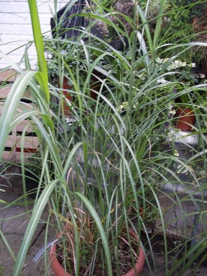 Grass_2_120826